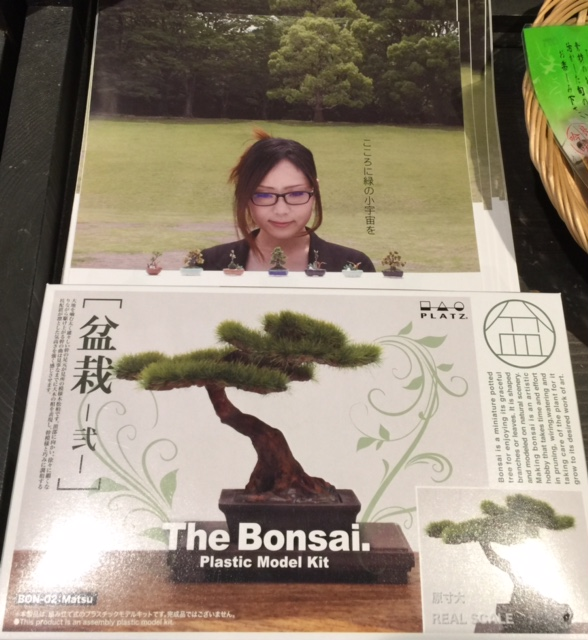 盆栽3.jpg